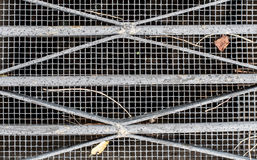 Sewer/ventilation grid with leaves and sticks Stock Photos