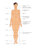 Sewing measurements Stock Image