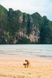 Sex on the beach. Monkey make love at Ao Nang beach Krabi Thailand Royalty Free Stock Photography