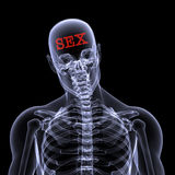 Sex on the Brain. X-Ray of a male skeleton thinking about SEX. Isolated on a black background vector illustration