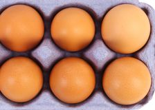 Sex brown eggs. Sex brown eggs in blue egg box Royalty Free Stock Image