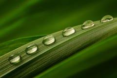 Sex droppar av vatten på en grön leaf Arkivfoton