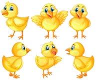 Sex gulliga fågelungar på vit bakgrund vektor illustrationer