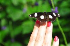 Sex prickiga skogvaktare Moth Arkivbild