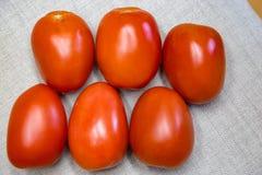 Sex röda Roma tomater Arkivfoto
