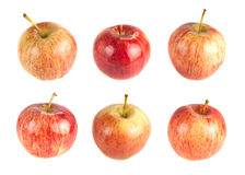 Sex röda mogna äpplen på en vit bakgrund Arkivfoton