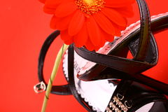 Sex shoes. Woman shoes isolated on the white background stock photos