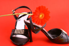 Sex shoes. Woman shoes isolated on the white background stock image