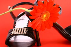 Sex shoes. Woman shoes isolated on the white background royalty free stock photography