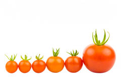 Sex tomater Arkivfoton
