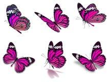 Sex uppsättning för monarkfjärilar Fotografering för Bildbyråer