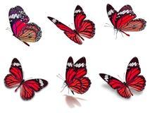 Sex uppsättning för monarkfjärilar Arkivfoton