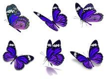 Sex uppsättning för monarkfjärilar Arkivbilder