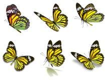 Sex uppsättning för monarkfjärilar Arkivfoto