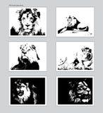 Sex vektoraffischer med spårade lejonhuvud Formatmodell för ANSI A royaltyfri illustrationer