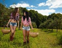 Sexiga kvinnor som bär korgar av äpplen Royaltyfri Foto