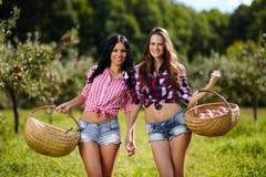 Sexiga kvinnor som bär korgar av äpplen Arkivbilder