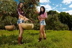 Sexiga kvinnor som väljer äpplen Fotografering för Bildbyråer