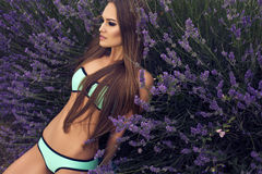 Sexy beautiful girl with long  hair in bikini posing at lavender Stock Image