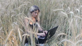 Sexy blonde sits at meadow wheat field and uses a laptop stock footage