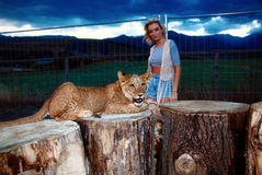 blonde woman playing with lion cub on Stock Photo