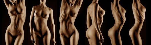 Sexy body nude woman. Royalty Free Stock Photos