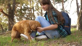 Sexy breeder girl is training a dog. Woman traveler with a dog. Teamwork. Favorite pet. Care and raising dogs. The girl. Sexy breeder girl is training dog. Woman stock image