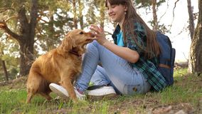 Sexy breeder girl is training a dog. Woman traveler with a dog. Teamwork. Favorite pet. Care and raising dogs. The girl. Sexy breeder girl is training dog. Woman royalty free stock photography