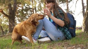Sexy breeder girl is training a dog. Woman traveler with a dog. Teamwork. Favorite pet. Care and raising dogs. The girl. Sexy breeder girl is training dog. Woman royalty free stock images