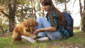 Sexy breeder girl is training a dog. Woman traveler with a dog. Teamwork. Favorite pet. Care and raising dogs. The girl. Sexy breeder girl is training dog. Woman royalty free stock image