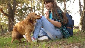 Sexy breeder girl is training a dog. Woman traveler with a dog. Teamwork. Favorite pet. Care and raising dogs. The girl. Sexy breeder girl is training dog. Woman stock images