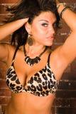 Sexy brunette in animal print bra lingerie Royalty Free Stock Photo