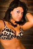 Sexy brunette in leopard print bra lingerie Stock Images