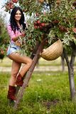 Sexy brunette picking apples Royalty Free Stock Image