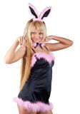 Sexy bunny girl Royalty Free Stock Image
