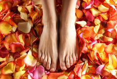 Sexy feet of a young woman on bright fallen petals Royalty Free Stock Images