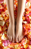 Sexy feet of a young woman covered with petals Stock Photos