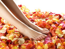 Sexy feet of a young woman on fallen petals Royalty Free Stock Photography