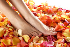 Sexy feet of a young woman on fallen petals Royalty Free Stock Images