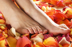 Sexy feet of a young woman on fallen petals Royalty Free Stock Photos