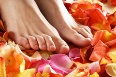Sexy female feet on beautiful rose petals Royalty Free Stock Images