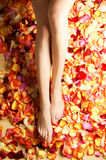 Sexy female legs with beautiful fallen petals Royalty Free Stock Photo
