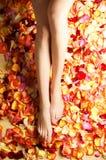 Sexy female legs with beautiful fallen petals. A close-up image of sexy female legs with beautiful bright fallen petals Royalty Free Stock Photo