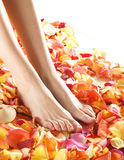 female legs on beautiful fallen petals Royalty Free Stock Photos