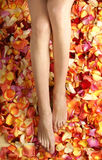 Sexy female legs on fallen petals backgorund Royalty Free Stock Photos
