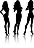 Sexy females Stock Image