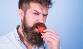 Sexy hipster van het mensen probeert knappe strikte gezicht met lange baard aardbei Hipster geniet van sappige rijpe rode aardbei stock foto's