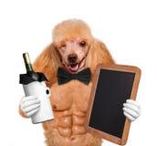 Sexy Hund. Kreativ. lizenzfreie stockfotografie