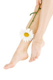 Sexy legs with camomile Royalty Free Stock Image