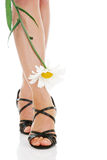 legs with camomile royalty free stock images